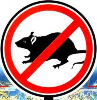 Ловушка для крыс фото