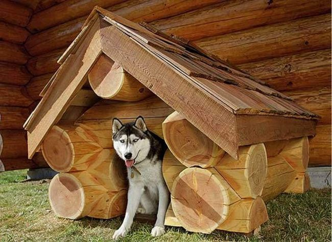 Будка для собаки из бревна своими руками