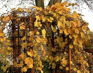 Сделать забор на даче недорого своими руками фото 149