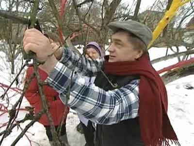 Как правильно обрезать яблоню весной видео