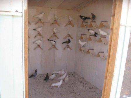 Очень важно, чтобы внутри голубятни были жерди, насесты, гнезда, а также специальные коммуникации