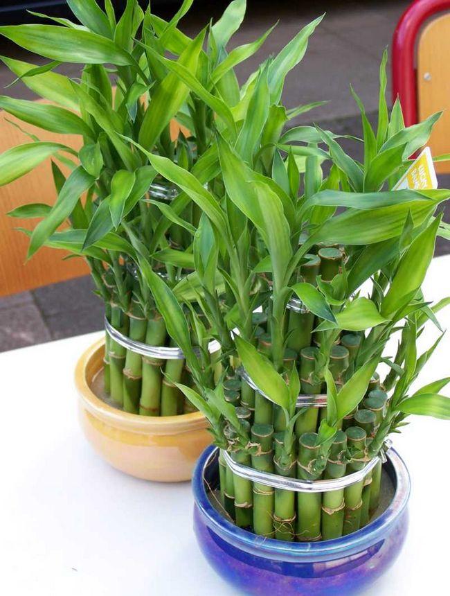 Бамбуковые цветы