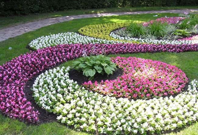 Цветы для солнечной стороны участка