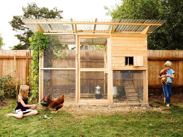 Строительство птичника на даче своими руками
