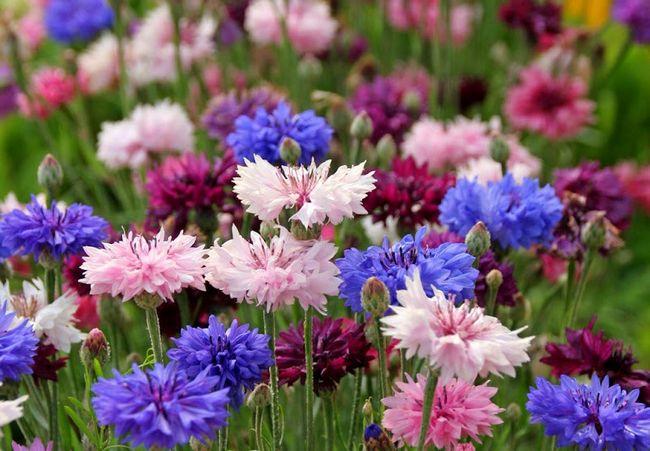 фото растений красивых