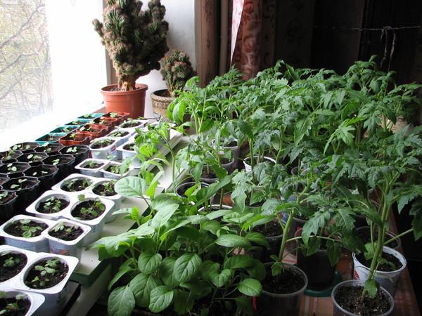 Что можно посадить в домашних условиях 440
